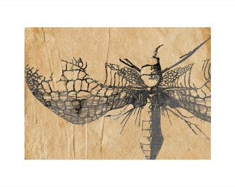 Vintage Insect Print