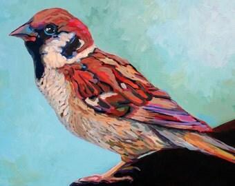 North American Sparrow