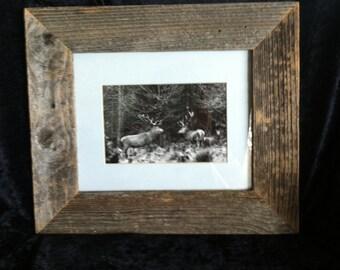 Elk Herd Picture & Frame