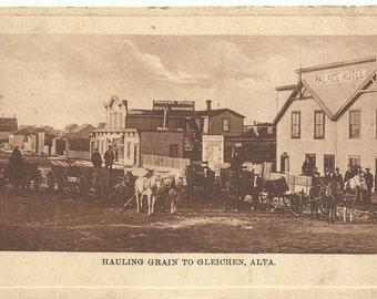 Vintage Postcard 1910's, Horsed & Wagons Hauling Grain to Gleichen, Alberta, Canada