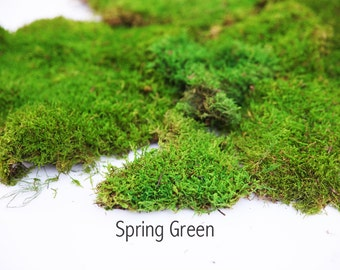 1 lb Preserved Moss in Spring Green. 2 colors to choose from.