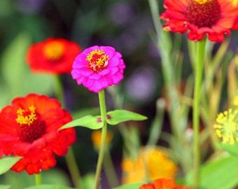 Butterfly Garden III (fine art digital file)
