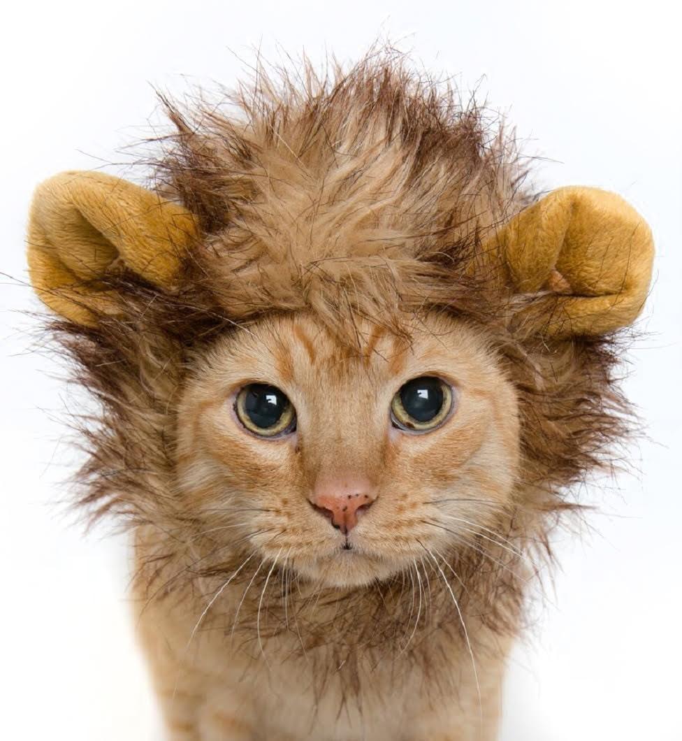 lion mane cat costume small dog costume. Black Bedroom Furniture Sets. Home Design Ideas
