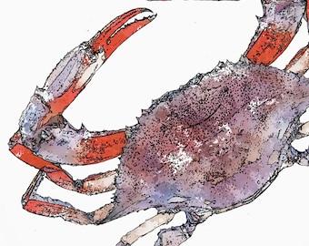 Red Crab Watercolor PRINTABLE  Instant DIGITAL Download