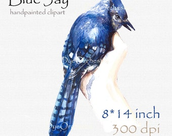 Digital clipart, watercolor clipart, watercolor bird, blue jay, birds, home design, blue bird