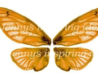 Orange Cicada Wings