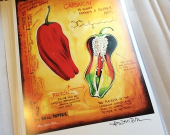 Capsaicin Padrón Pepper Science Art Print 11x17 Poster Art by Surly Amy Davis Roth