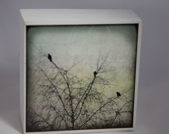 Birds, Tree, Pastels, Photograph on White Wood Panel--Three of a Kind--Fine Art