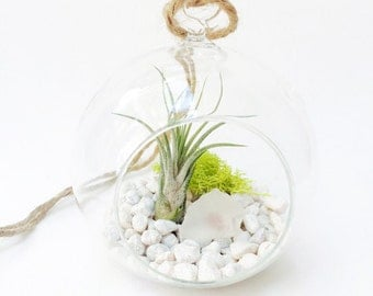 Glass Terrarium with Air Plant, Moss and Sea Glass