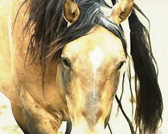 Wild Buckskin Stallion - Enhanced Photo