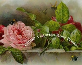 Pink Victorian Cabbage Roses, Art Print, Paul de Longpre, Half Yard Long
