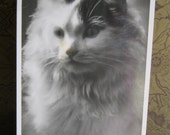 SALE !!! Antique Postcard. From my album Cats and Kittens. Real Photo. 1940 era
