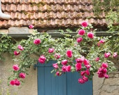 France Photography, Blue door and Summer Roses in the South of France, Martel, Summer, Roses,Nature, Pink, bathroom wall art,French Wall Art