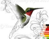 Humming Bird Adult Coloring Page Digi Stamp Instant Download Printable PDF
