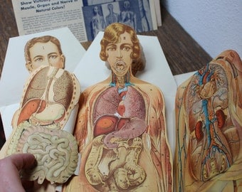 Anatomy Paper Manikin Pull Out Medical The Modern Home Physician Pair Male Female VINTAGE by Plantdreaming