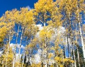 Blue Sky + Yellow Aspens, Crested Butte, Colorado (photograph, various sizes)