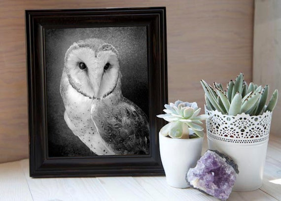 "Owl Photograph  Art  - An Original Signed 8 x 10 Black and White Photograph ""Wisdom"""