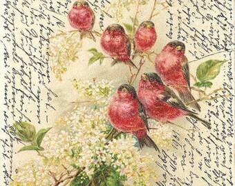 vintage script birds flowers postcard scan digital image handwriting fabric transfer jpg diy tag label card printable download