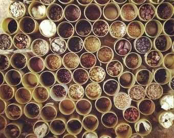 any 5 packs of hierloom seeds