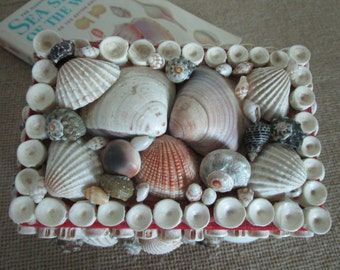 Shell Encrusted Trinket Box  Sailor's Valentine Jewelry Box   Wedding  Gift for Her