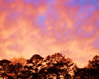 Colorful Sky over the Pines