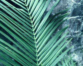 Green Palm Leaves Photograph, Mid Century Style Art, Botanical Home Decor, 16x20, Large Modern Wall Art, California Botanical Landscape