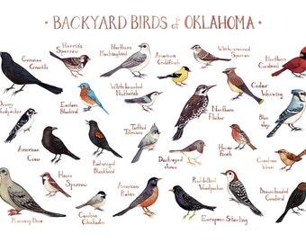 Oklahoma Backyard Birds Field Guide Art Print / Watercolor Painting / Wall Art / Nature Print / Bird Poster