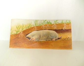 Vintage Mammal Flash Card Color Paper Ephemera Eastern Mole 60's (item 12)