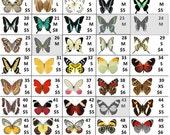 Custom Butterfly Listing