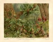 Antique Botanical Print Araceae, German Color Lithograph Flowering Plants Tropical Flora Vintage Print