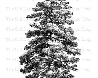Pine Tree Clip Art Printable Nature Botanical Digital Download Transfer Image PNG JPG