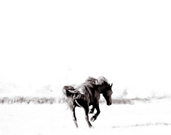 Black horse photography print. Wild horse bucking in the wind wall art. Running horse home decor. Black and white photo gift for horse lover