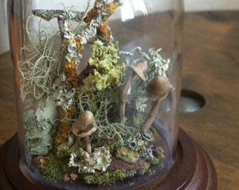 Miniature Wandering Terrarium