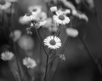 "Small Flowers 8""x10"" Print"
