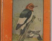 Vintage Children's Book BIRDS BOOK I  1934