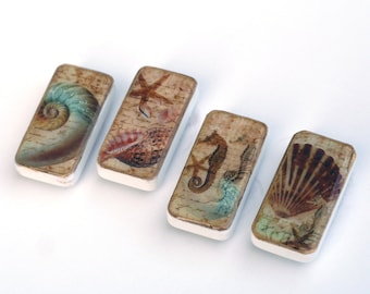 sea shell magnets, beach theme domino magnet set, seahorse, starfish, nautilus clam shells, fun gift ideas