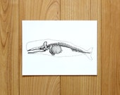 Sperm whale skeleton A4 print