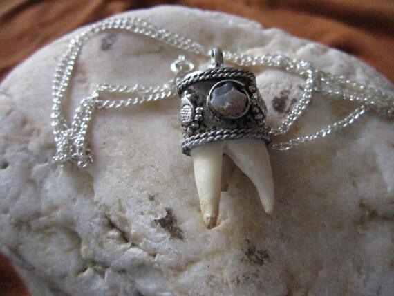 wolf molar tooth teeth w agate gemstones by