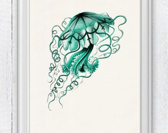 Jelly fish Discomedusa - sea life print- Marine  sea life illustration A4 print SPOJ04