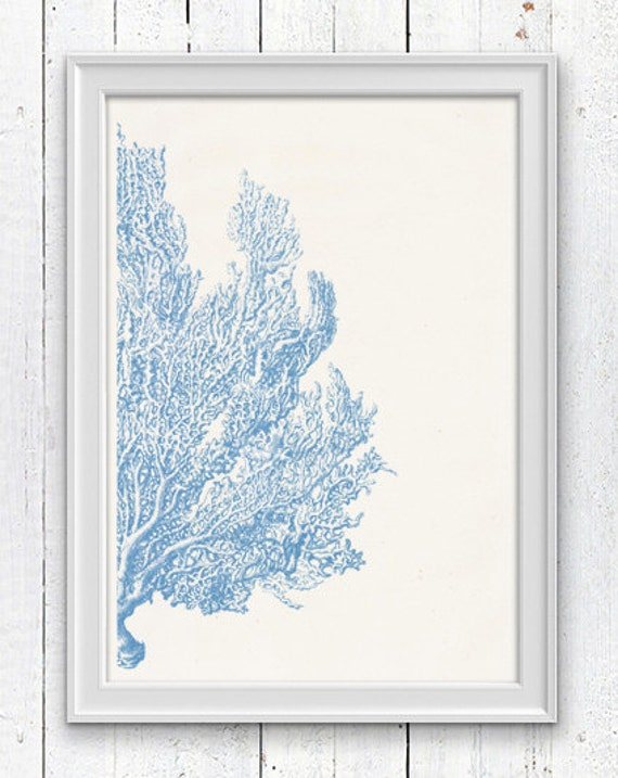 Light blue Sea fan coral no.04 - Antique sealife Illustration - sea life print-Marine  sea life illustration A4 print SPC041
