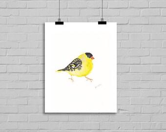 Bird Watercolor Print Bird Print Yellow Black Bird Watercolor Painting Art Print Watercolor Print Watercolour Wall Art