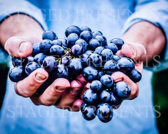 Stock Photo - Grapes in Hands - Digital Download - Wall Art - Color Photo - Fruit Photo - Farmer Photo - Vineyard Photo - Wine