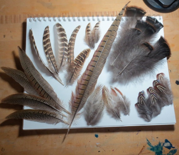 30pc natural feathers craft feathers pheasant turkey for Natural feathers for crafts