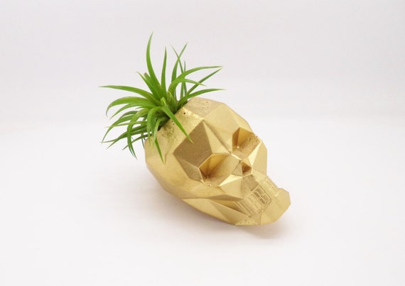 Geometric skull planter mini air plant holder by for Geometric air plant holder