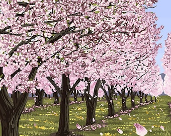 Cherry Orchard Blossoms (Art Prints available in multiple sizes)