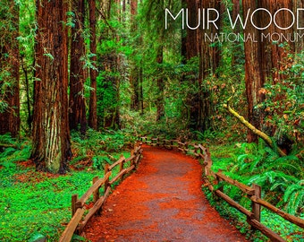 Muir Woods National Monument, California - Path #1 Photograph (Art Prints available in multiple sizes)