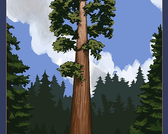 Palo Alto, California - California Redwoods (Art Prints available in multiple sizes)