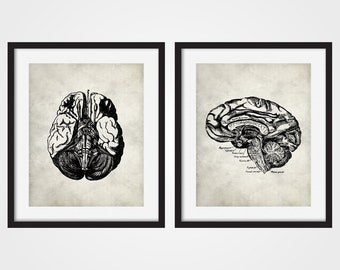 Anatomy Art Print, Human Brain, Brain Art, Human Anatomy Set of Two, Anatomy Wall Art, Medical Student Gift, Gift For Doctor, Science Art