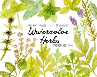 Watercolor Clipart - Watercolor Clip Art - Watercolor herbs Clipart Illustration