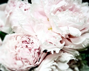 Peony print flower photography girl bedroom decor pink flower photography peony photography botanical print nursery decor pink art PEONY